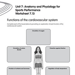 sports anatomy and physiology