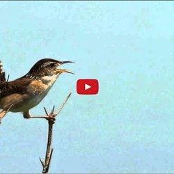 relaxation oiseaux