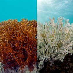 protecting our coral reefs persuasive essay pearltrees corals are dying on the great barrier reef