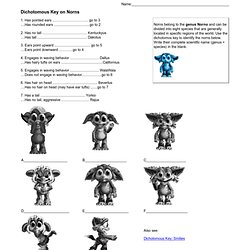 Printables Dichotomous Key Worksheet dichotomous key worksheet answers dog shark rose intrepidpath worksheets animals