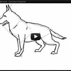 Video Dessiner Chien Et Loups Pearltrees