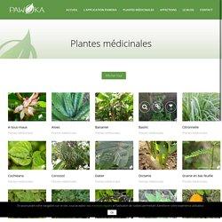 jardin creole plantes medicinales