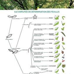 La classification des végétaux