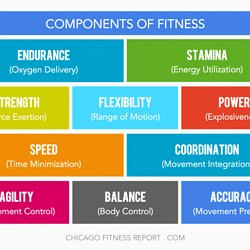 11 components of physical fitness pdf