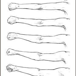 Références anatomie | Pearltrees