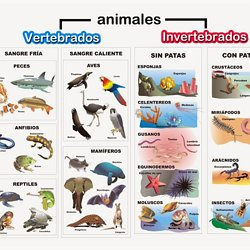 LOS ANIMALES  Pearltrees